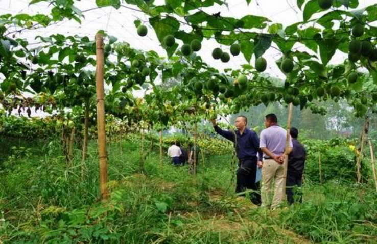 农村创业-农村创业的好项目